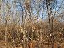 [대구 봄꽃소식] 대구수목원에 봄의 전령사 야생화중에 가장빠른 섣달에 꽃이피며 좋은 향기를 풍기는 노란색 납매(당매),꽃,효능.