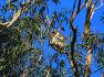 호주 10일차 (17.9.25일) 프리멘탈과 퍼스