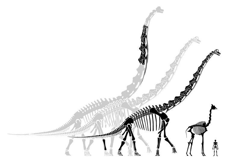 가장 키 큰 공룡은?