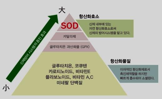 SOD (Superoxide Dismutase) 항산화효소 란 무엇인가?
