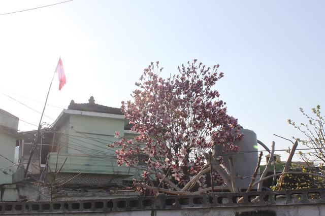 봄꽃 피는 그 동네를 돌아나오며